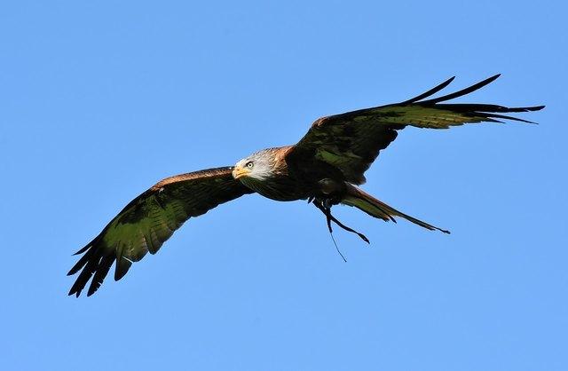 Kommen Sie in den Naturpark & beobachten Sie die Greifvögel in ihrem jährlichen Zug in den Süden