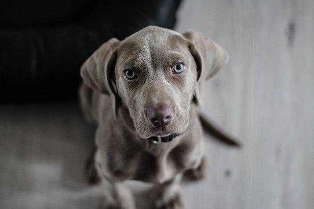 Die Kurse für Hundebesitzer mit ihren Vierbeinern