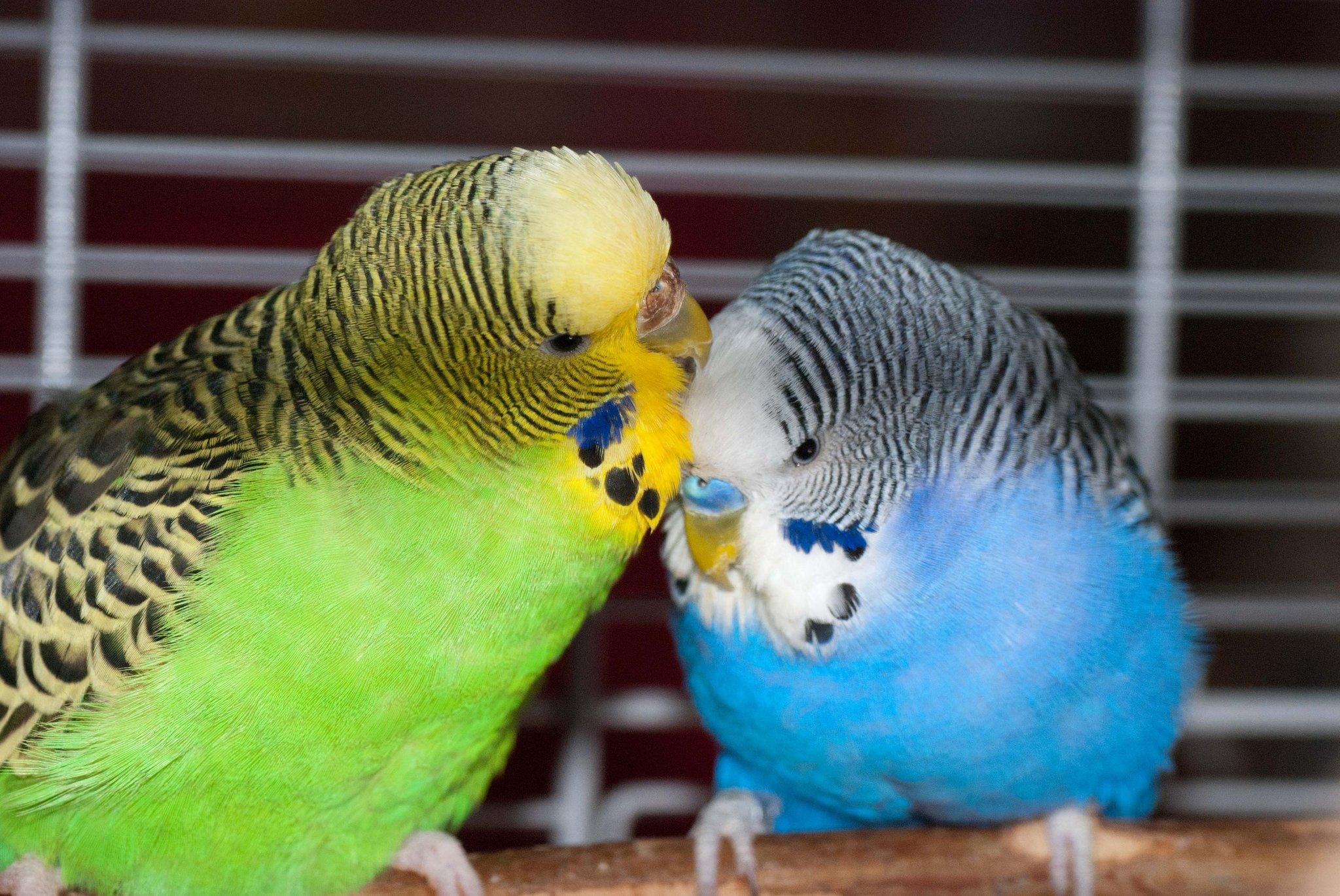 Vogelverkauf