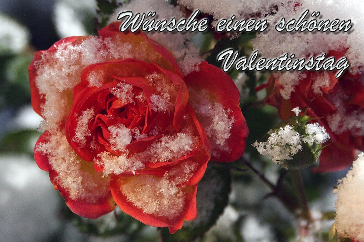Wuensche zum valentinstag